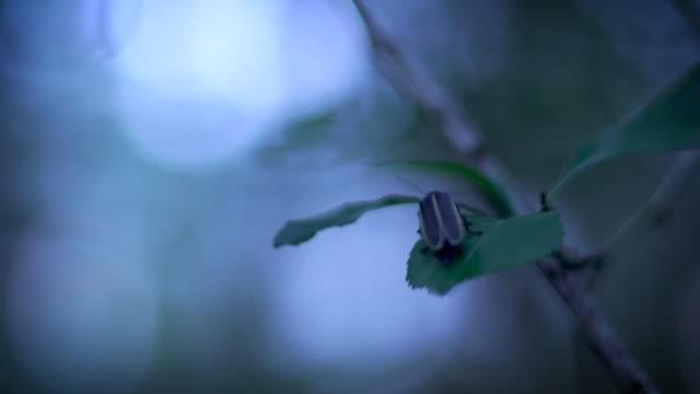vídeos de stock e filmes b-roll de firefly in night forest - pirilampo escaravelho