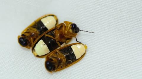 stockvideo's en b-roll-footage met firefly (bug) - vuurvliegje