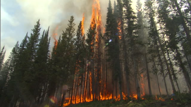 Fires burn and smoke drifts in forest, Yellowstone, USA