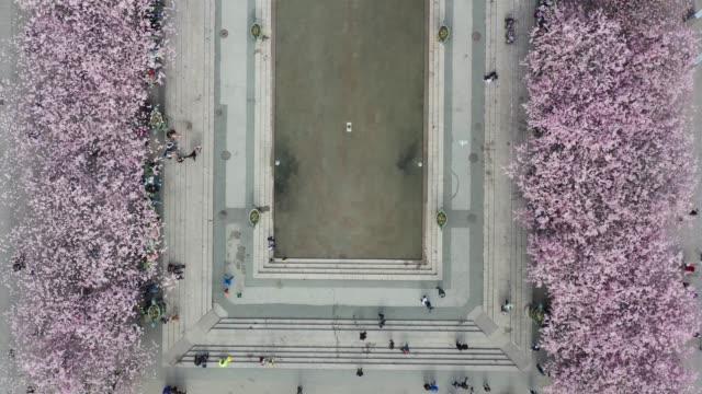 stockvideo's en b-roll-footage met eerste kersenbloesem en fontein, kungstradgarden - stockholm