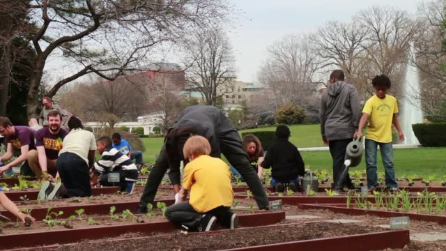 stockvideo's en b-roll-footage met ls first lady michelle obama joins foodcorps leaders and local students to plant the white house kitchen garden for the sixth year in a row in 2009... - 2010