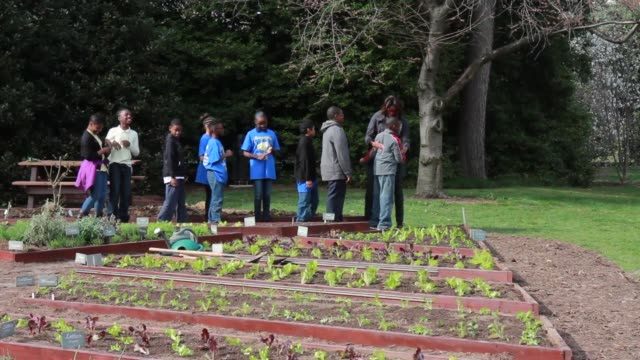 stockvideo's en b-roll-footage met ws first lady michelle obama joins foodcorps leaders and local students to plant the white house kitchen garden for the sixth year in a row in 2009... - 2010