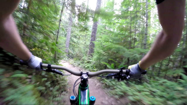 first person perspective enduro mountain biking - tree trunk stock videos & royalty-free footage