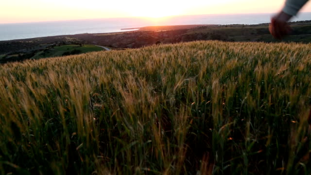 First person perspective of a woman walking into sunset wheat field