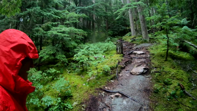 first person perspective of man hiking in temperate rainforest - jacket stock videos & royalty-free footage