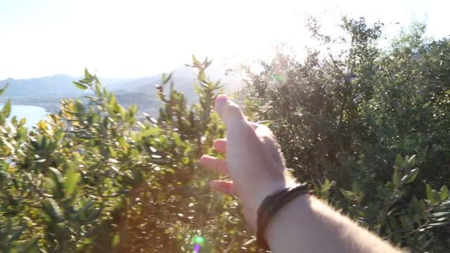 ビューを歓迎 outstreched 腕の最初人の視点 - 部分点の映像素材/bロール