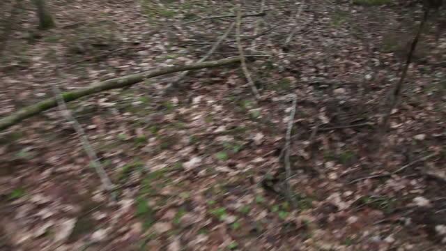blick aus erster person auf eine flucht im wald - shaky stock-videos und b-roll-filmmaterial