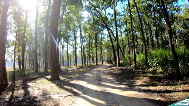 first person view of indian forest safari in central india - hill stock videos & royalty-free footage
