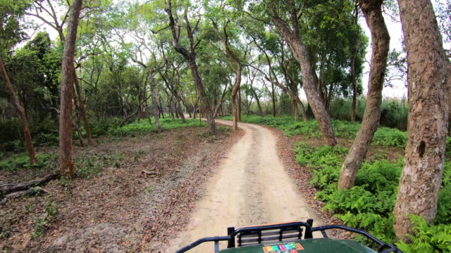first person view of indian forest safari in central india - non urban scene stock videos & royalty-free footage