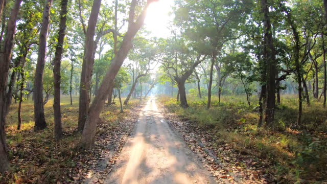 first person view of indian forest safari in central india - country road stock videos & royalty-free footage