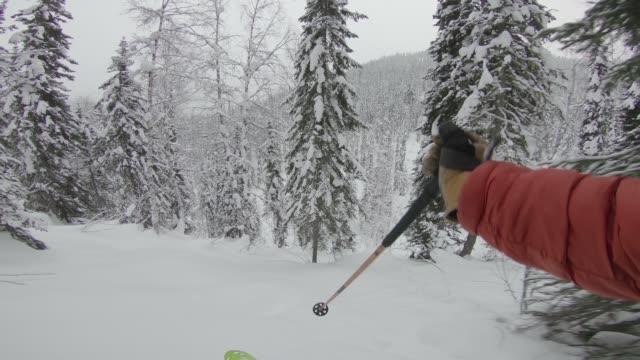 first person view skiing powder through forest - ski jacket stock videos & royalty-free footage