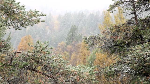 最初の秋の雪。 - 地衣類点の映像素材/bロール