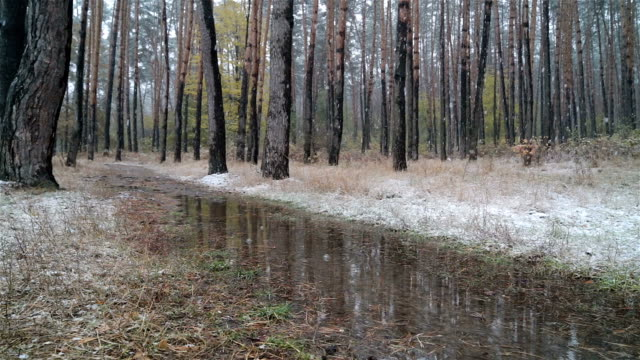 first snow in the forest. road with puddles. - slush stock videos and b-roll footage