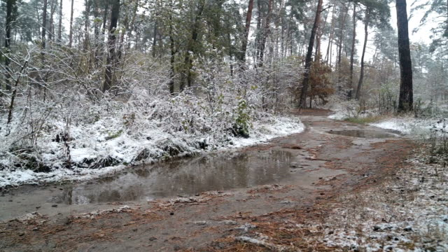 First snow in the forest. Road with puddles.