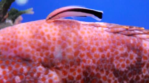 fish 07 - satoyama scenery stock videos & royalty-free footage