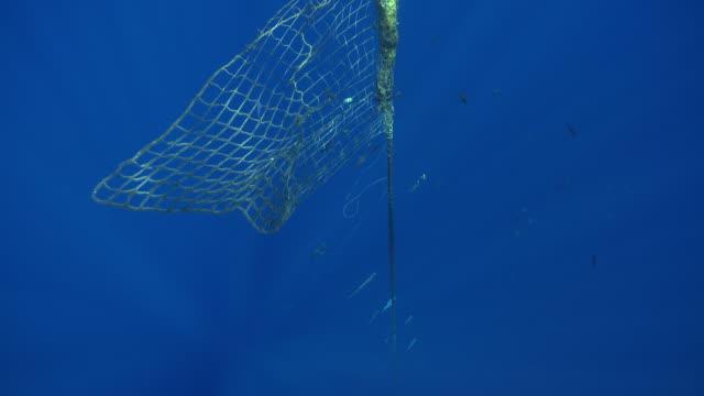 MS TU TD Fish aggregration device / Hawaii, United States