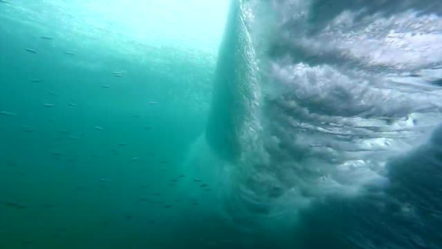 fish and a wave underwater - underwater stock videos & royalty-free footage