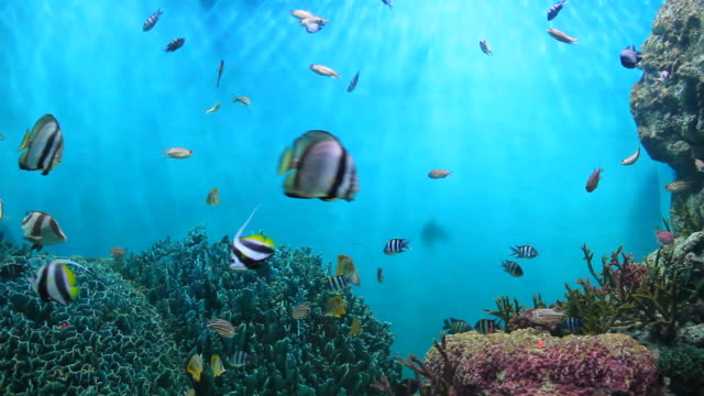 fish and coral. - tropical fish stock videos & royalty-free footage