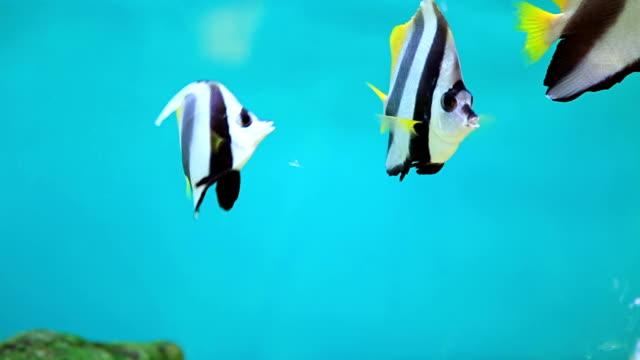 fish and coral. - tropisk fisk bildbanksvideor och videomaterial från bakom kulisserna