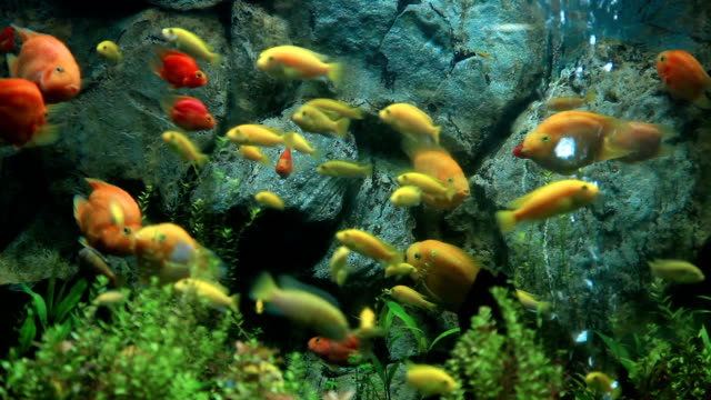 fish and coral. - goldie stock videos & royalty-free footage