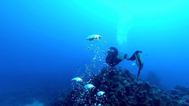 vídeos de stock e filmes b-roll de peixes e mergulhador - câmara vestível