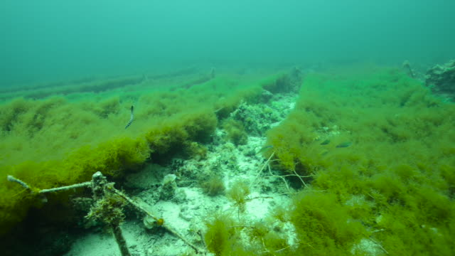 fish and sea snake swim around nets cultivating seaweed, okinawa, japan. - algae stock videos & royalty-free footage