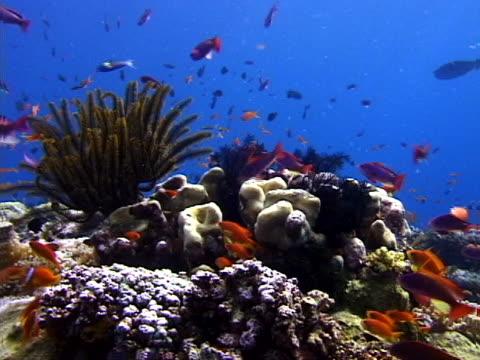fish around a reef - tierisches exoskelett stock-videos und b-roll-filmmaterial