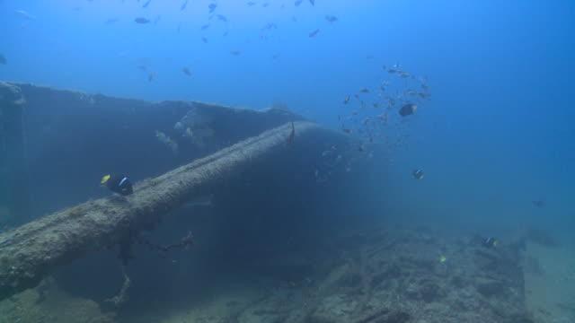 fish around wreck, la paz, sea of cortez, mexico - shipwreck stock videos and b-roll footage