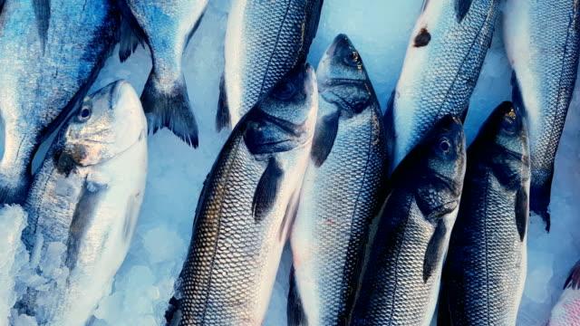 vídeos de stock e filmes b-roll de fish at the market - peixe congelado