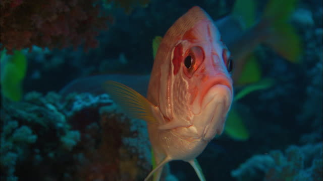 fish at the sea bed - 20 seconds or greater stock videos & royalty-free footage
