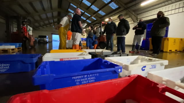 fish auction and trawlers in harbor in fleetwood, lancashire, england, u.k., on tuesday, october 20, 2020. - dead animal stock videos & royalty-free footage