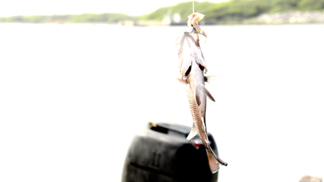 fish bait - hook stock videos and b-roll footage