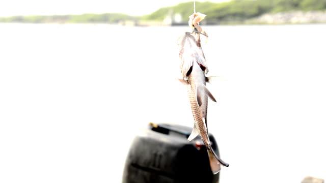 fish bait - hook stock videos & royalty-free footage