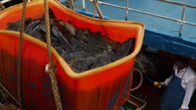 fish being carried from a trawler which has docked in hong kong's victoria harbour - fishing boat stock videos & royalty-free footage