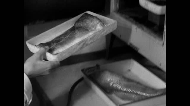 fish being checked for radioactive contamination from windscale; 1956 - 1956 stock videos & royalty-free footage