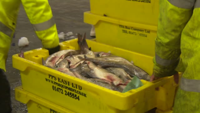 fish being put into ice containers at a port - fishing stock videos & royalty-free footage
