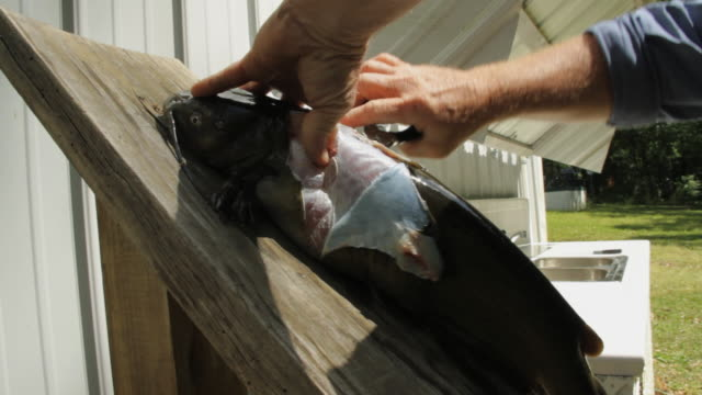 CU Fish being skinned by man / Madison, Florida, USA