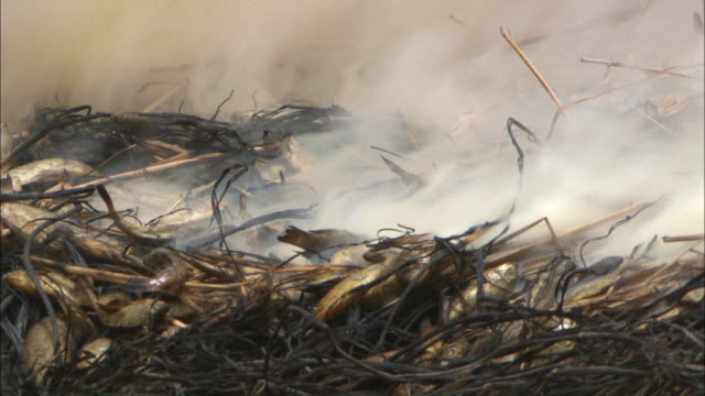 stockvideo's en b-roll-footage met fish being smoked on dry hay in mali - reportage