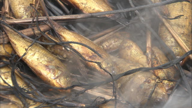 fish being smoked on dry hay in mali - smoked stock videos & royalty-free footage