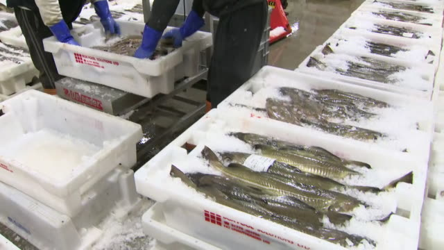 fish being stocked at a fish market - fishing stock videos & royalty-free footage