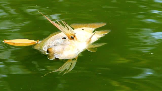 魚の死 - チョークの跡点の映像素材/bロール