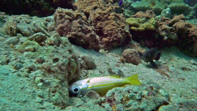 Fish dying in the ocean - fish kill