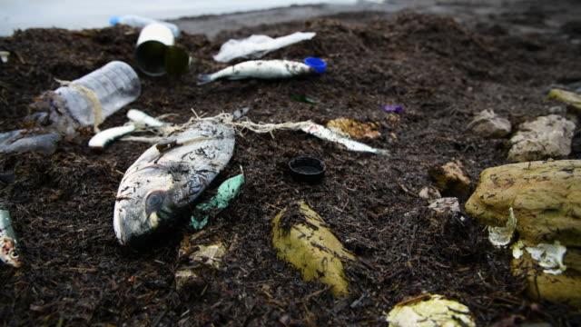 fisk insnärjd i fiskenät - vattenförorening bildbanksvideor och videomaterial från bakom kulisserna
