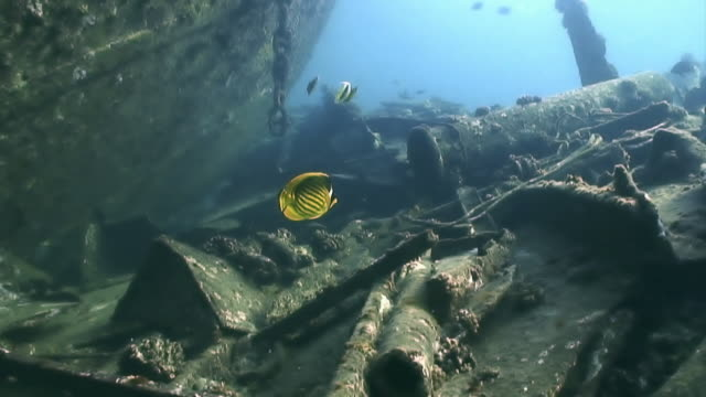 stockvideo's en b-roll-footage met fish explore the remains of a sunken ship - geruïneerd