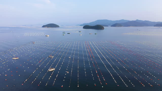 fish farm and nearby islands / gyeongsangnam-do, south korea - künstlich stock-videos und b-roll-filmmaterial
