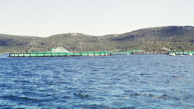 ws fish farm in adriatic sea - documentary footage stock videos and b-roll footage