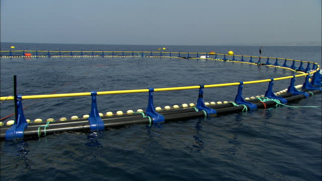 a fish farm pen floats in the mediterranean sea. available in hd. - pen stock videos & royalty-free footage