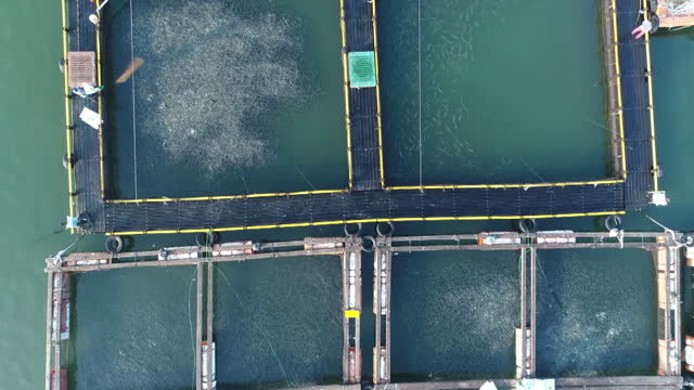 vidéos et rushes de fish farm seen from sky / south korea - nourrir