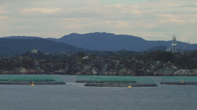 fish farming in norway - cage stock videos & royalty-free footage