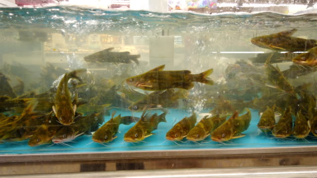 fish for sale in supermarket - alternative energy stock videos & royalty-free footage